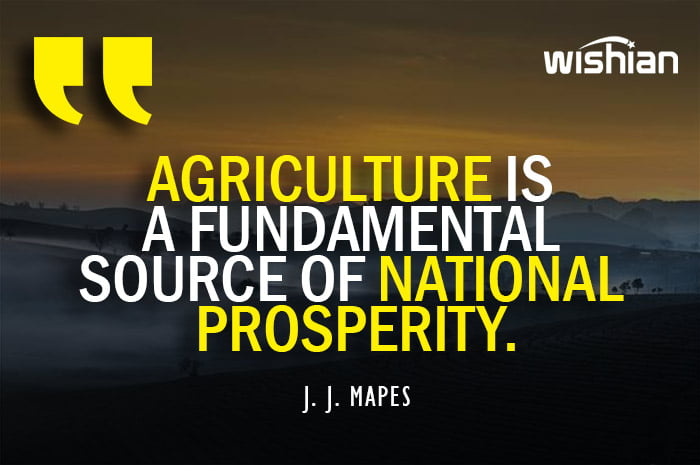 Agriculture Quotes by J J MAPES