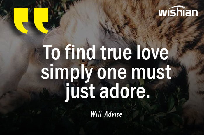 Will Advise Quotes about finding true love by adore